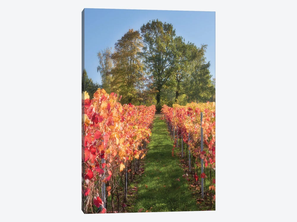 The Vines In Alsace by Philippe Sainte-Laudy 1-piece Canvas Wall Art