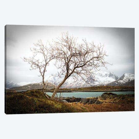 Tormented Canvas Print #PSL168} by Philippe Sainte-Laudy Canvas Print