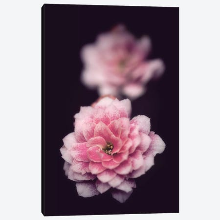 Two Is Better Canvas Print #PSL172} by Philippe Sainte-Laudy Canvas Wall Art