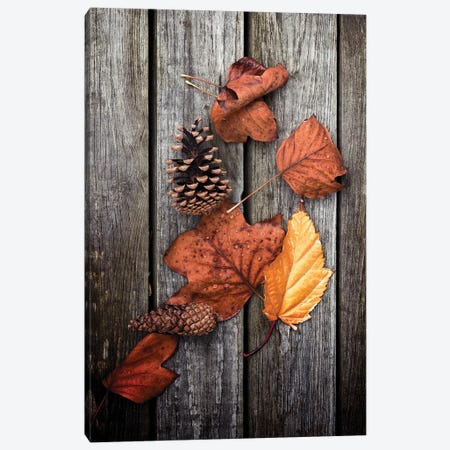 Under Trees Canvas Print #PSL173} by Philippe Sainte-Laudy Canvas Artwork