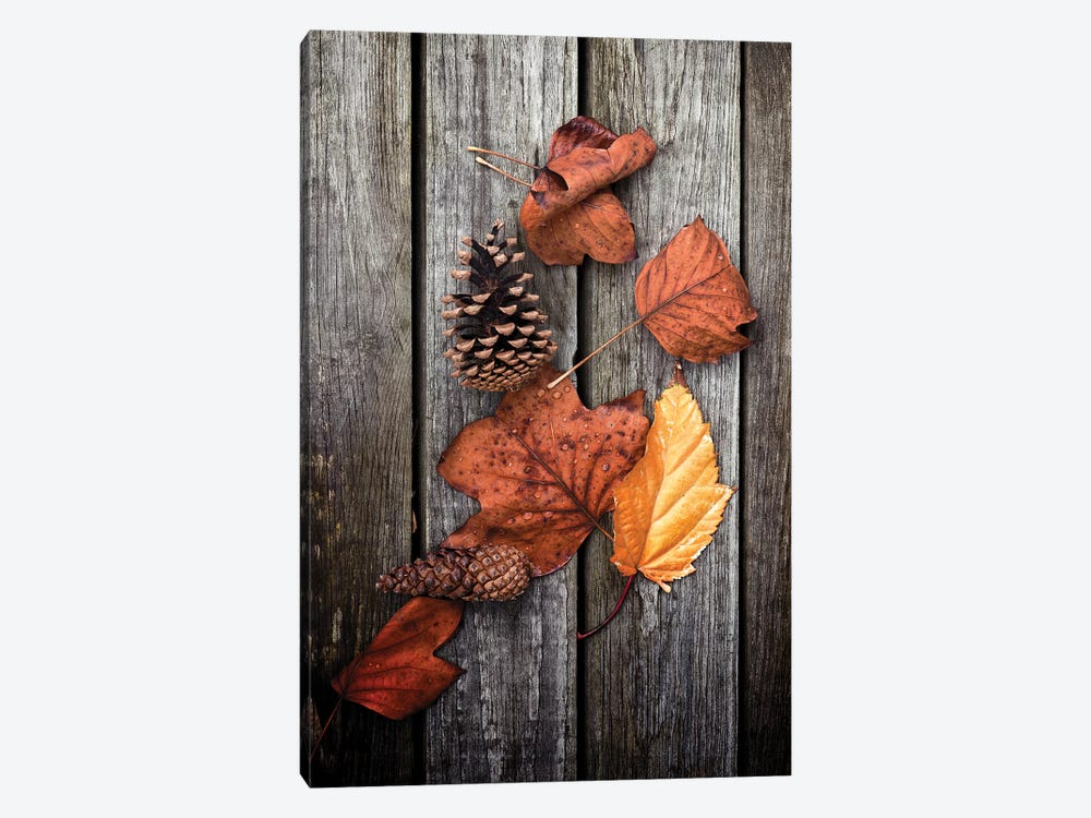 Under Trees by Philippe Sainte-Laudy 1-piece Canvas Wall Art