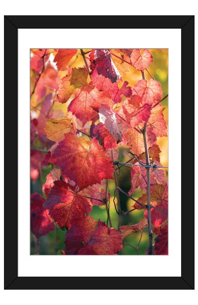 Vine Leaves In Autumn Framed Art Print