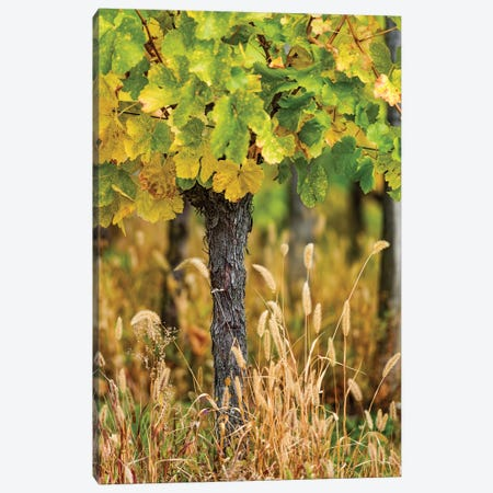Vines Canvas Print #PSL177} by Philippe Sainte-Laudy Canvas Art Print