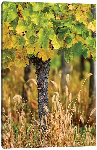 Vines Canvas Art Print