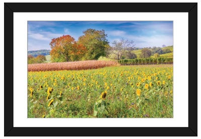 Vines And Sunflowers Framed Art Print