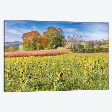 Vines And Sunflowers Canvas Print #PSL178} by Philippe Sainte-Laudy Canvas Wall Art