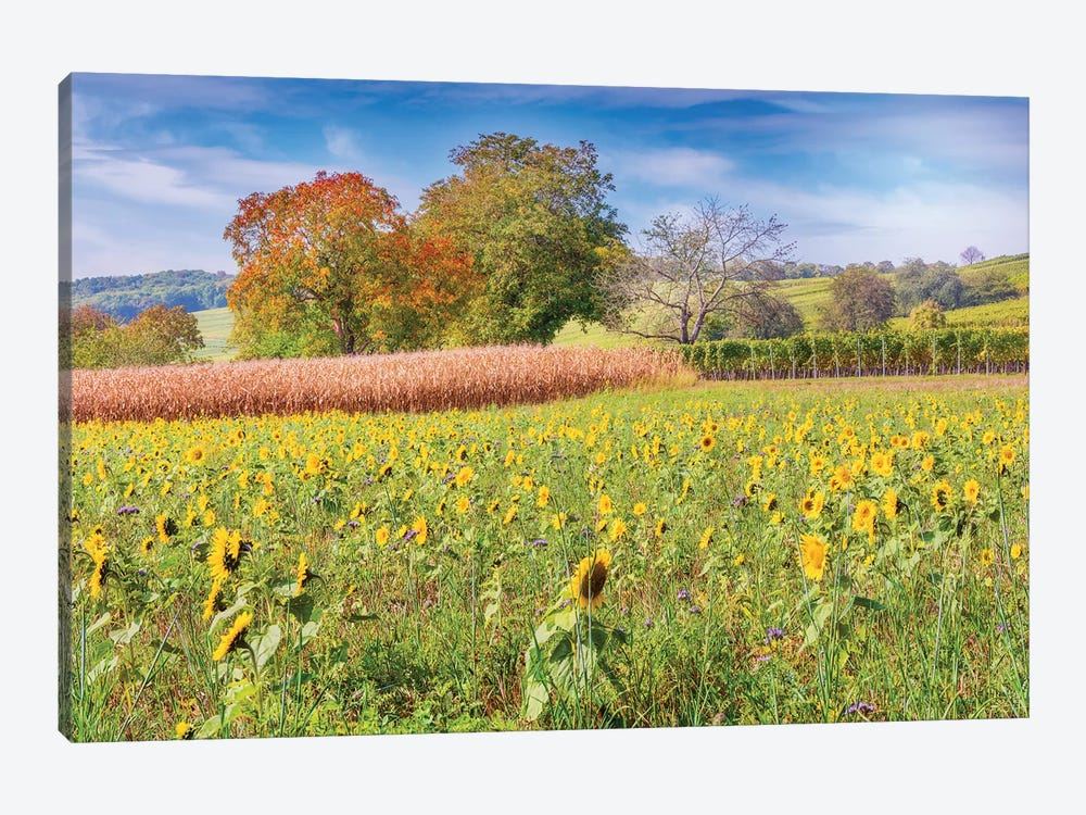 Vines And Sunflowers by Philippe Sainte-Laudy 1-piece Art Print