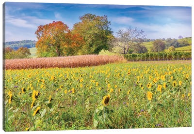 Vines And Sunflowers Canvas Art Print