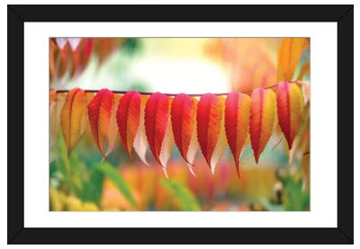 Virginia Sumac Leaves Framed Art Print