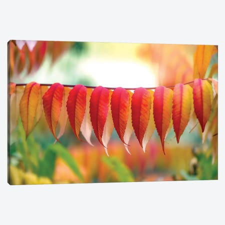 Virginia Sumac Leaves Canvas Print #PSL179} by Philippe Sainte-Laudy Canvas Art