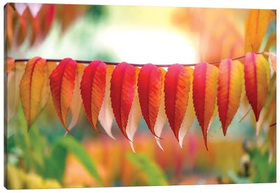 Virginia Sumac Leaves Canvas Art Print