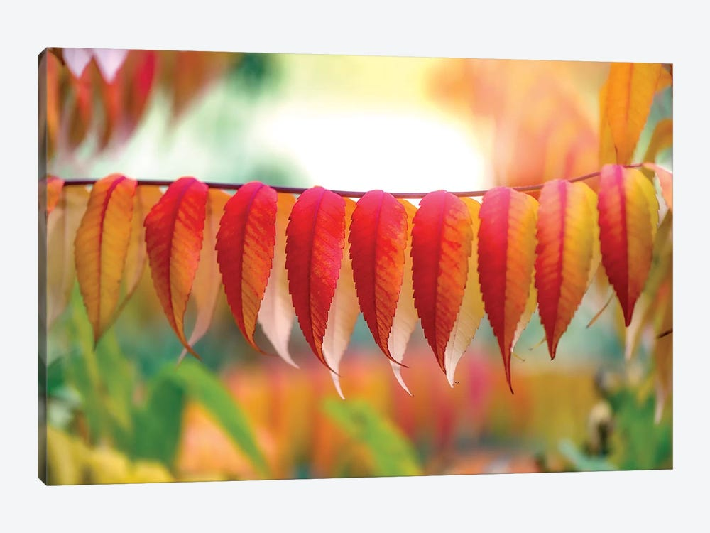 Virginia Sumac Leaves by Philippe Sainte-Laudy 1-piece Canvas Wall Art