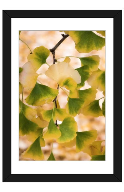 Autumn Pearls Framed Art Print