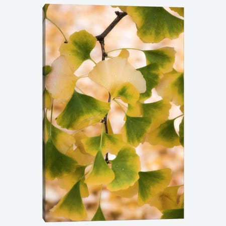 Autumn Pearls Canvas Print #PSL17} by Philippe Sainte-Laudy Canvas Wall Art