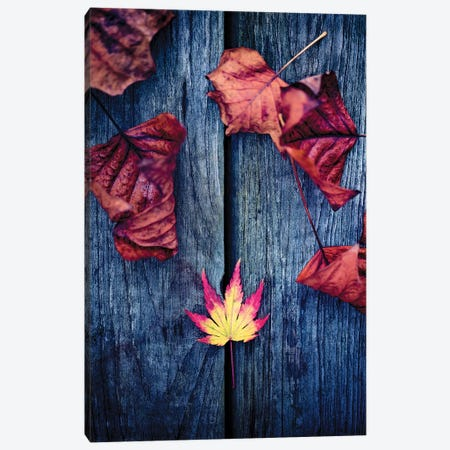 Welcome Autumn Canvas Print #PSL182} by Philippe Sainte-Laudy Art Print