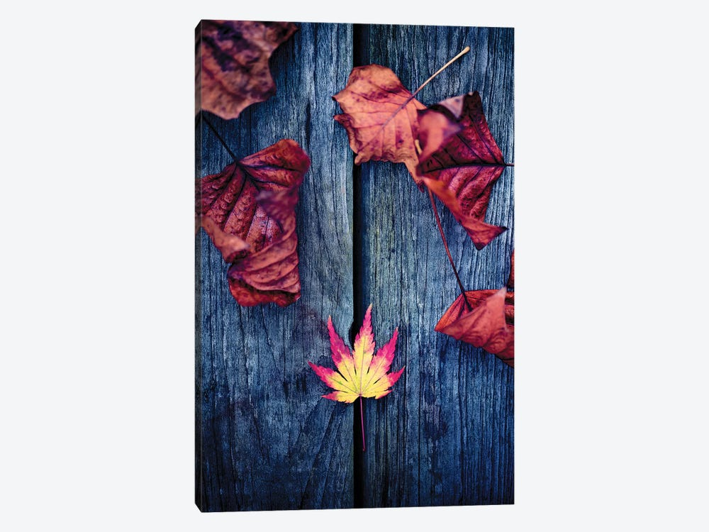 Welcome Autumn by Philippe Sainte-Laudy 1-piece Canvas Art