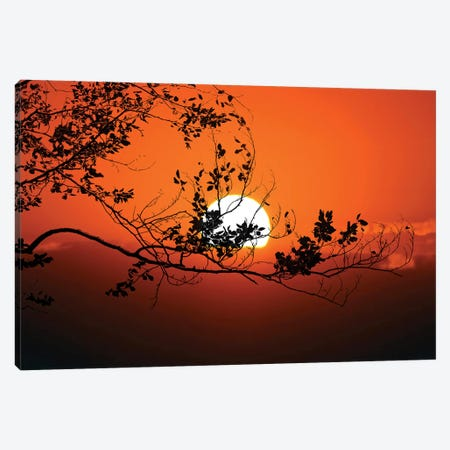 World On Fire Canvas Print #PSL188} by Philippe Sainte-Laudy Canvas Print