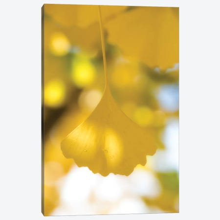 Yellow Range Canvas Print #PSL189} by Philippe Sainte-Laudy Canvas Art Print