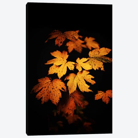Autumn Photo Canvas Print #PSL18} by Philippe Sainte-Laudy Canvas Print