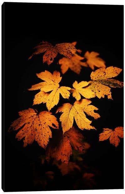 Autumn Photo Canvas Art Print