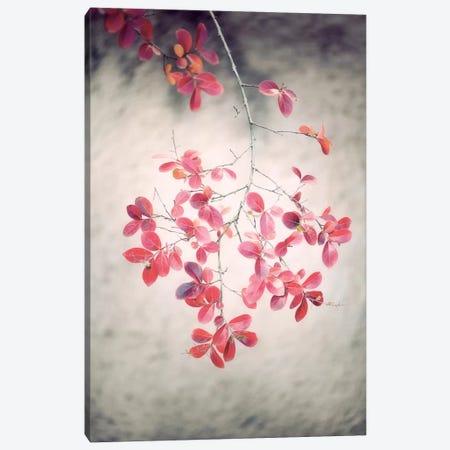 Autumn Poetry Canvas Print #PSL19} by Philippe Sainte-Laudy Art Print