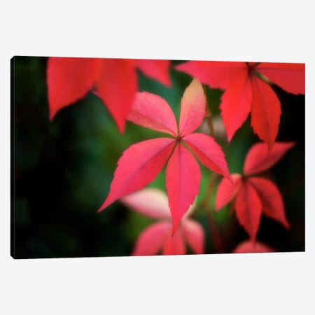 Autumn Red In October Canvas Print #PSL20} by Philippe Sainte-Laudy Canvas Wall Art