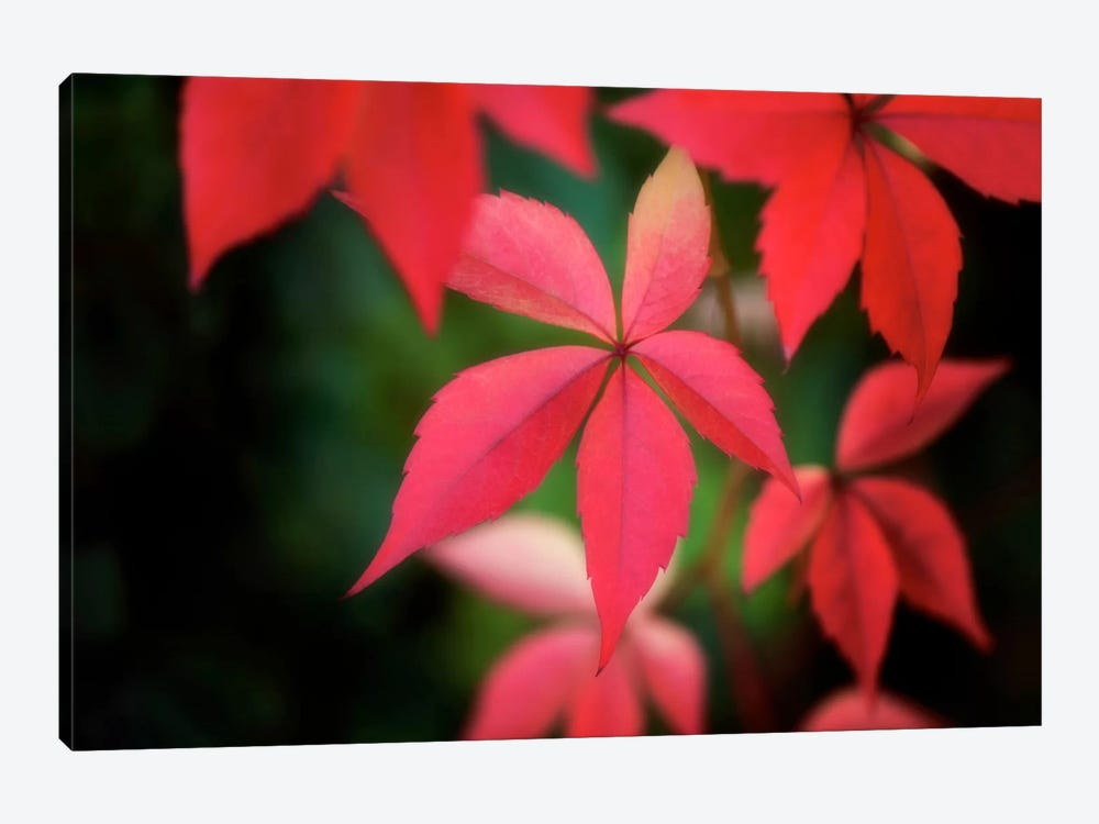 Autumn Red In October by Philippe Sainte-Laudy 1-piece Canvas Wall Art