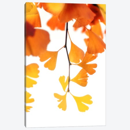 Autumn Splender Canvas Print #PSL21} by Philippe Sainte-Laudy Canvas Artwork