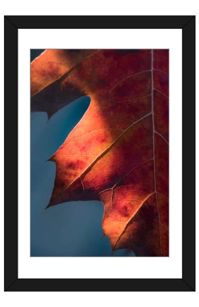 Autumn Sweetness Framed Art Print