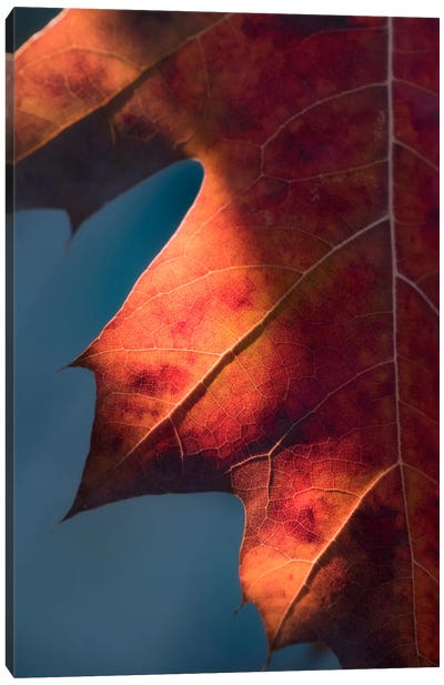 Autumn Sweetness Canvas Art Print
