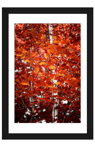 Autumn Triumph Framed Art Print
