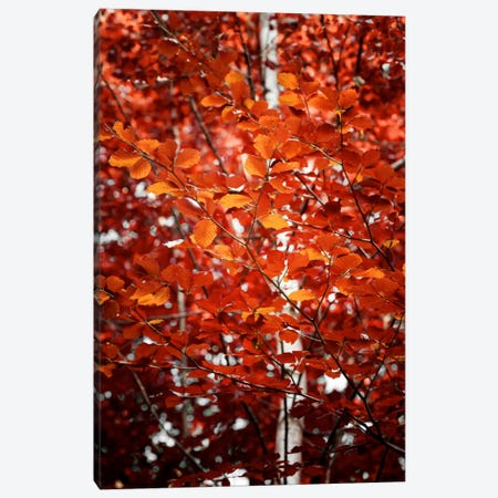 Autumn Triumph Canvas Print #PSL23} by Philippe Sainte-Laudy Canvas Artwork