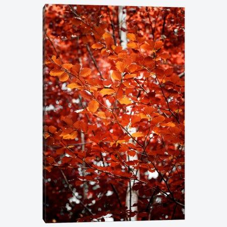 Autumn Triumph Canvas Print #PSL23} by Philippe Sainte-Laudy Canvas Artwork