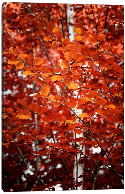 Autumn Triumph Canvas Art Print