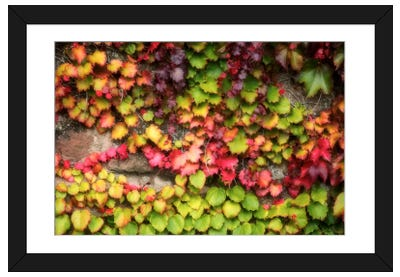 Autumn Vine Framed Art Print