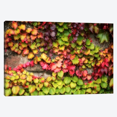 Autumn Vine Canvas Print #PSL24} by Philippe Sainte-Laudy Canvas Art Print