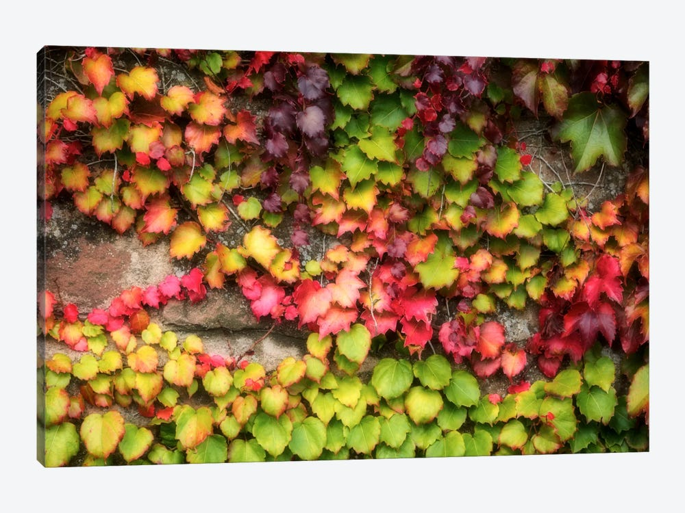 Autumn Vine by Philippe Sainte-Laudy 1-piece Canvas Art