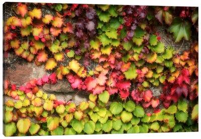 Autumn Vine Canvas Art Print