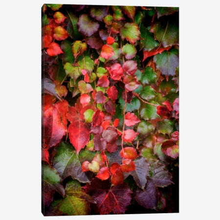 Autumn Wall Canvas Print #PSL25} by Philippe Sainte-Laudy Canvas Print