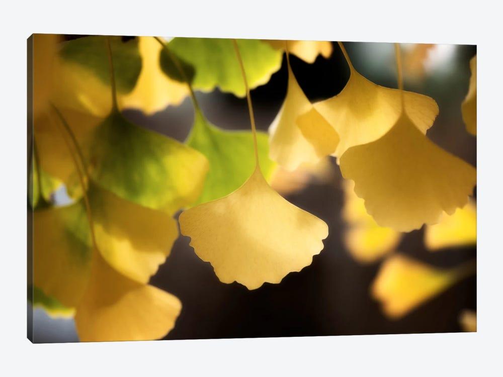 Autumnal Colours by Philippe Sainte-Laudy 1-piece Canvas Artwork