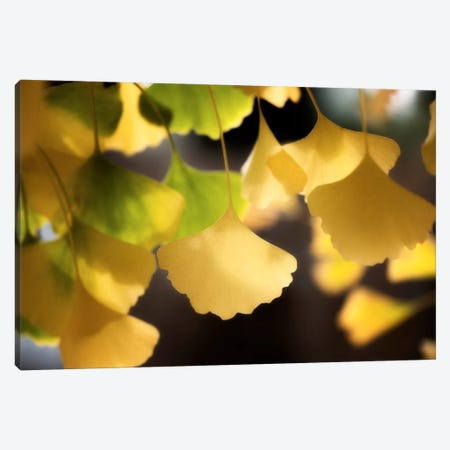 Autumnal Colours Canvas Print #PSL26} by Philippe Sainte-Laudy Canvas Art Print
