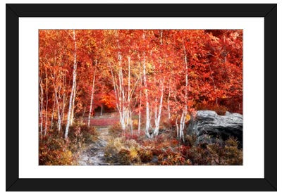 Birches Garden Framed Art Print