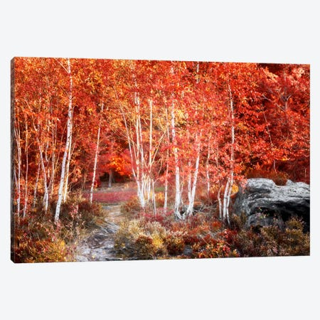 Birches Garden Canvas Print #PSL32} by Philippe Sainte-Laudy Art Print