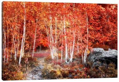 Birches Garden Canvas Art Print