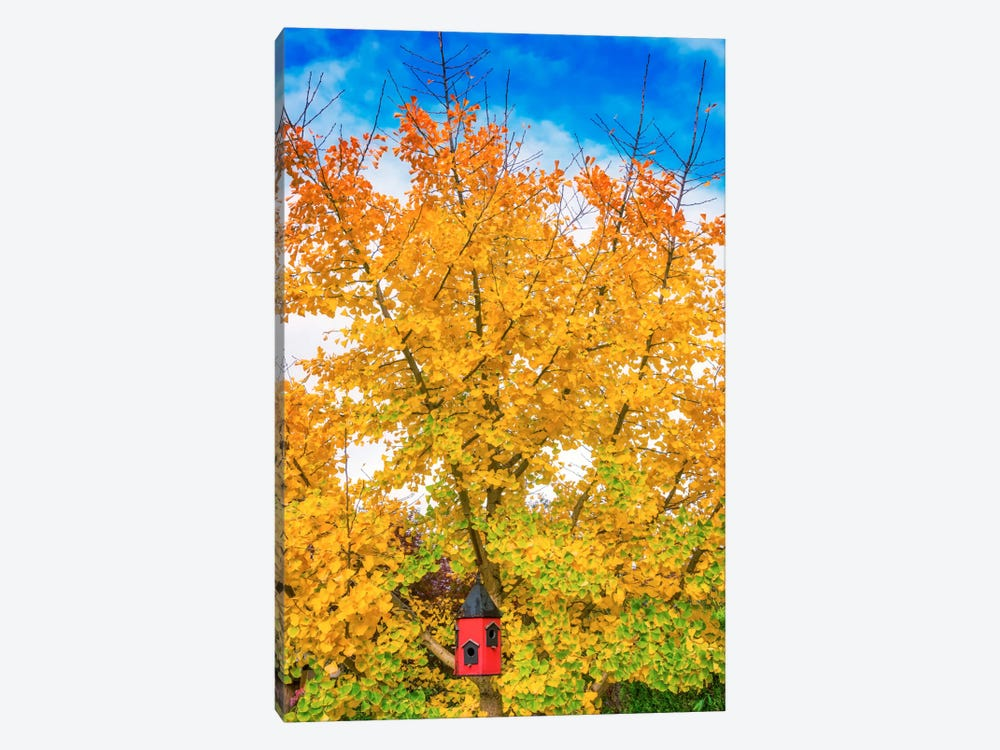 Bird House In Ginkgo by Philippe Sainte-Laudy 1-piece Canvas Art