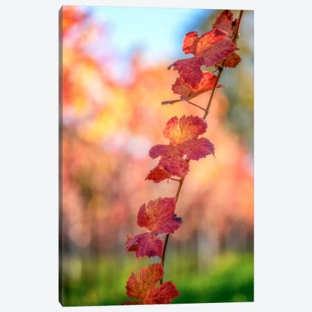 Bokeh On Vines Canvas Print #PSL36} by Philippe Sainte-Laudy Canvas Artwork
