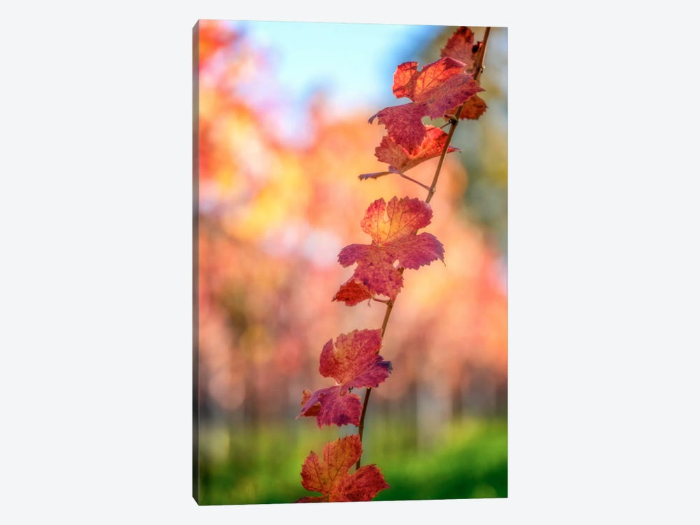 Bokeh On Vines by Philippe Sainte-Laudy 1-piece Canvas Art Print