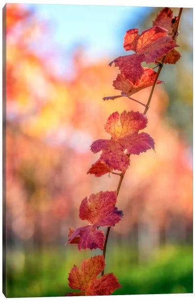 Bokeh On Vines Canvas Art Print