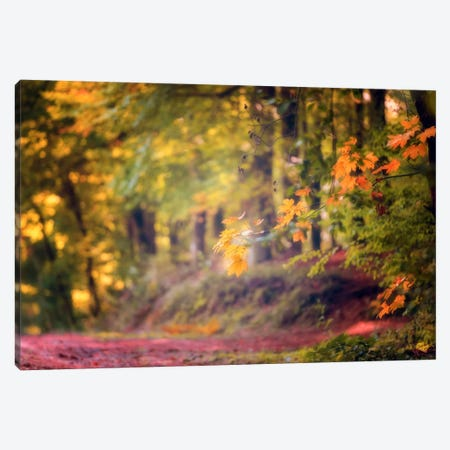 Bright Wood Canvas Print #PSL39} by Philippe Sainte-Laudy Art Print