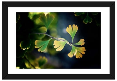 A Leaf Tells The Fall Framed Art Print